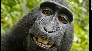 Click image for larger version  Name:140808122043-01-selfie-monkey-0808-exlarge-169.jpeg Views:243 Size:92.5 KB ID:10557