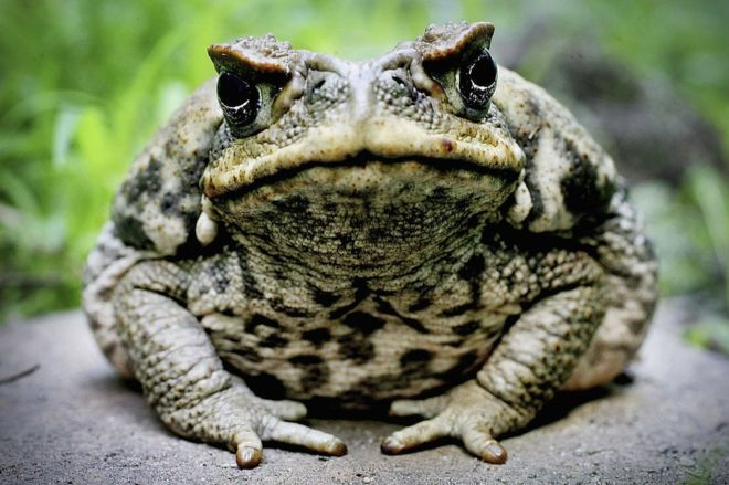 Click image for larger version  Name:toad.jpg Views:70 Size:58.0 KB ID:10616
