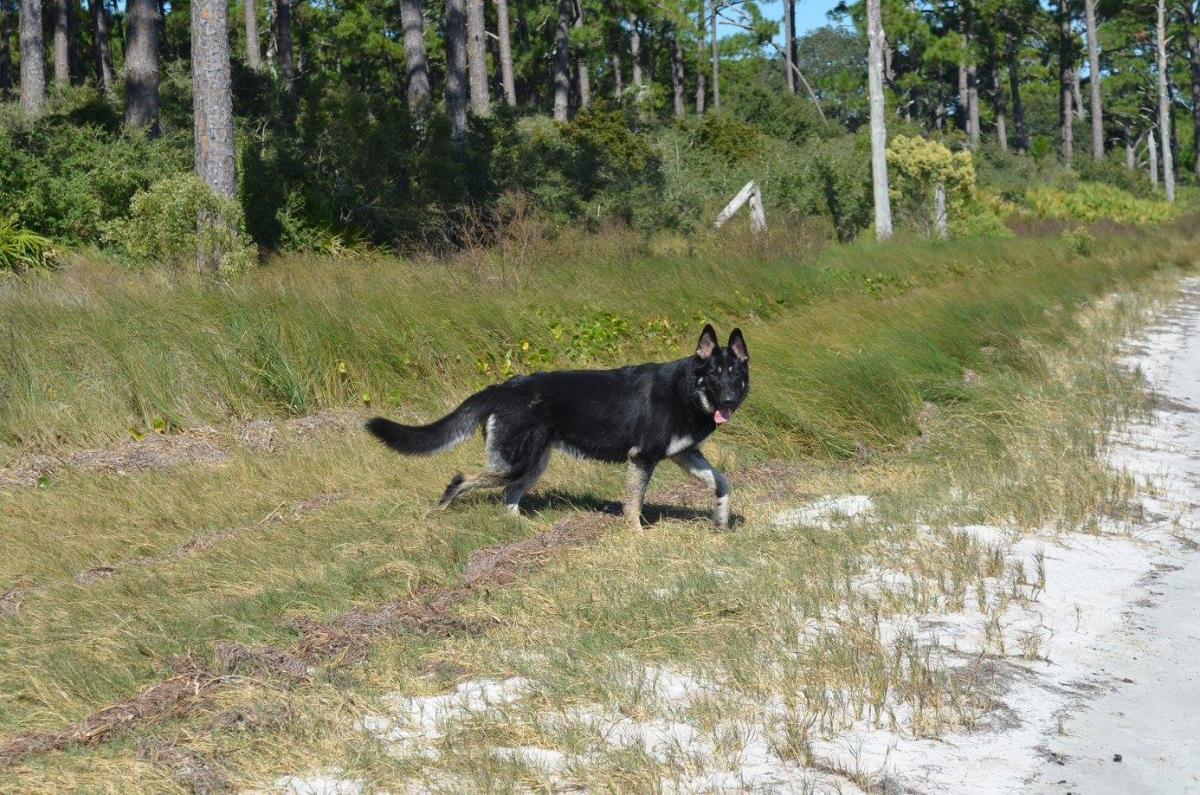 Click image for larger version  Name:Macey - Carrabelle.jpg Views:170 Size:235.8 KB ID:1170
