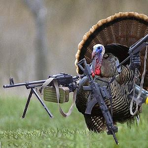 Click image for larger version  Name:armed-turkey.jpg Views:68 Size:119.8 KB ID:14388