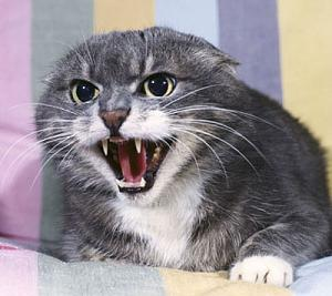 Click image for larger version  Name:defensive-cat.jpg Views:96 Size:31.8 KB ID:15522