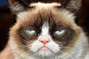 Click image for larger version  Name:Grumpy-cat.jpg Views:101 Size:68.0 KB ID:16928