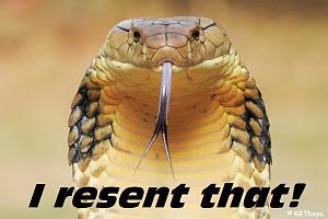 Click image for larger version  Name:king-cobra-palpa.jpg Views:126 Size:114.4 KB ID:20159