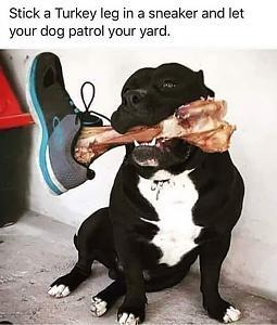 Click image for larger version  Name:Patrol Dog.jpg Views:50 Size:89.1 KB ID:21819