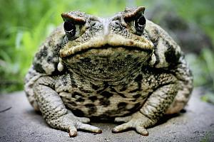 Click image for larger version  Name:Toad 01.jpg Views:56 Size:58.0 KB ID:22221