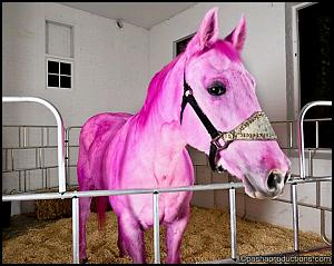 Click image for larger version  Name:Horse of a different color.jpg Views:28 Size:79.0 KB ID:27443