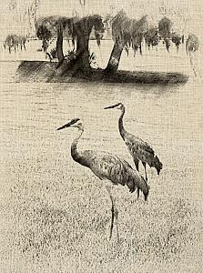 Click image for larger version  Name:cranes in Florida.jpg Views:121 Size:226.0 KB ID:2847