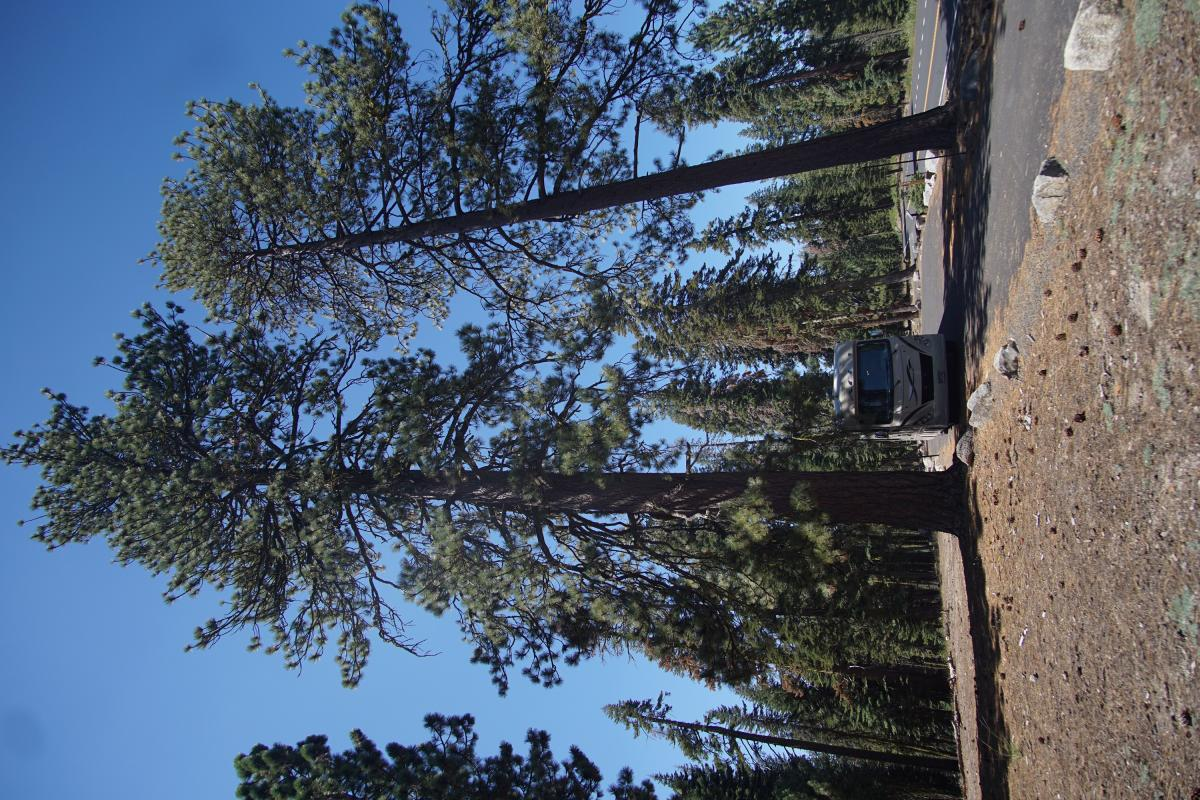 Click image for larger version  Name:tree.jpg Views:85 Size:230.8 KB ID:6273